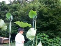 三渓園の珍しい出し物「蓮の葉シャワー」
