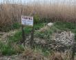 多摩川の河川敷で問題となっている不法耕作(撮影/村田らむ)