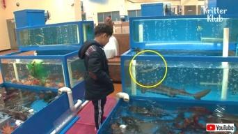 レストランで売り物のサメが出産?フトツノザメのお母さんと赤ちゃん、無事に海に帰る