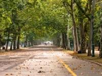 都市の緑化で「喘息」が低下(depositphotos.com)