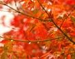紅葉が色づく条件は...(画像はイメージ)
