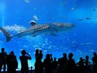 自然も街も!沖縄旅行に行ったら絶対行きたい人気観光スポット20選