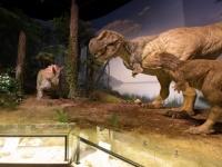 茨城県自然博物館の「動くティラノサウルス」の展示(撮影=オフィス ジオパレオント)