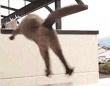 思わず笑うっきゃないじゃない?動物たちの面白GIF総集編