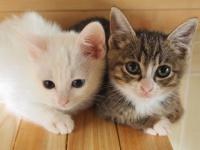 今日は「猫の日」 海外でも知られている日本の「猫小説」とは