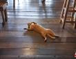 「どうぞご自由におモフり下さい」猫が床に転がったまま微動だにしないレストランの風景(タイ)