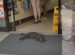 ナイスアイデア! 意外なところで涼んでいるタイの猫。