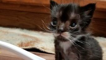 スプーンに乗りそうな小さな子猫、心優しい家族のもとで成長中