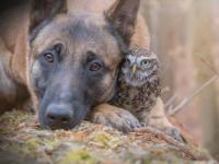 小さなフクロウと大きな犬の最強コンビ、出会ってすぐに大親友に(ドイツ)