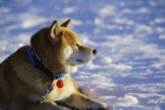 雪景色に鯉料理・張り子づくり!柴犬まるの郡山ツーリズム第2弾