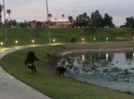 ワンパクすぎ!鳥を追いかけたワンちゃんが、ご主人もろとも池に突っ込んでしまう。