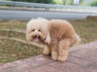 放置された犬のフンをDNA解析して飼い主を特定するサービスが地域ごとに開始される(アメリカ、カナダ、イギリス)