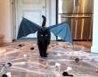 黒猫が招くのは不運じゃなくて幸運だから!ブラックキャットの魅力を詰め合わせでお届け