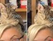 リモートワーク中、子猫が頭の上に乗ってきた。そのままうたた寝をしてしまうほのぼの事案