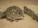 """イギリスの動物園で生まれた双子の""""ハネジネズミ""""が天使すぎた…"""