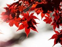 秋の恋が加速する! おすすめ紅葉デートプラン3選