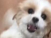 ペットホテルで飼い主の帰りを待っていた分離不安症を抱える犬、感動の再会で見せた満面のスマイル