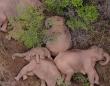 かわよかわよ。寄り添ってお昼寝する15頭の象の群れを上空から撮影