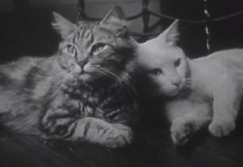 なんと1947年に撮影された猫動画が話題に!頑張るパパとママ、出産~育児のプライベートライフ(出産シーンあり)