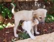 母を失った子犬、シリアのキャットマンに救われ、猫の聖地で幸せな生活を取り戻す