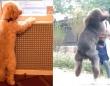 愛犬の「おかえりなさい!さびしかったよ!」飼い主との再会に大はしゃぎする犬たち