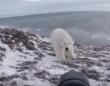度胸ありすぎ! シロクマを正面から追い払うロシアの写真家。