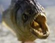 魚や水鳥が減っていると思ったら・・・イギリスの湖でピラニアの死骸が2匹発見される。