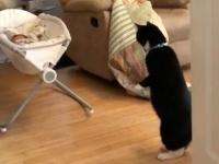 未知との遭遇。生まれてはじめてニンゲンの赤ちゃんを見て呆然と立ち尽くす猫