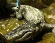 ヒトラーの愛したワニがモスクワ動物園で死去。享年84歳