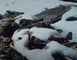 おびただしい数の人骨が散らばるヒマラヤの湖、スケルトンレイクの謎