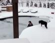 無我夢中の救出劇。凍ったプールに薄着で飛び込み、素手で氷を割りながら愛犬を救い出した女性