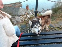 犬に優しいイングランドの田舎町を歩いてみた!お散歩大好きマラミュート、シェルパの1日ぶらり旅