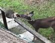 うまいうまい、猫うまい。全部溶かしきるほどに猫を舐める鹿