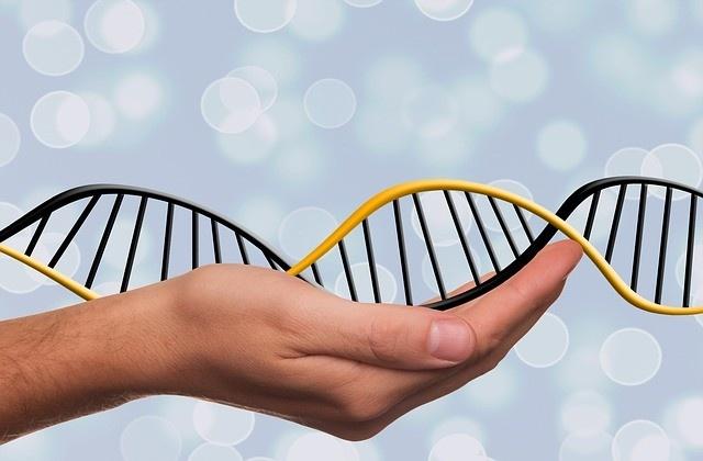 全身の再生を司る遺伝子を制御するDNAのスイッチが発見される(米研究)