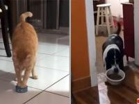 猫と犬が食べ物を運ぶ、それぞれの事情