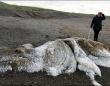 イエティ?絶滅したマンモス?巨大で毛深い「海の怪物」の死骸が打ち上げられて騒ぎに(ロシア)