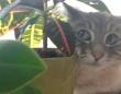 猫の目は口ほどに物を言う?人間じみた視線で語りかける猫たちの写真集