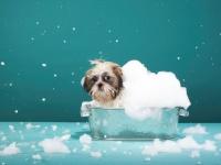 食器洗いするときは要注意! 洗剤は「泡」がなくてもキレイになるって本当?