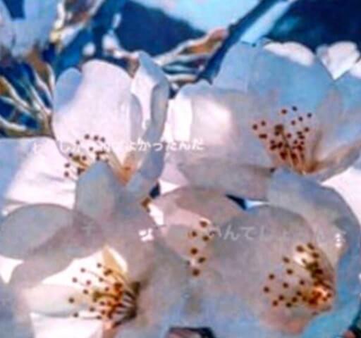 梨花 ツイート 足立