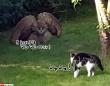 民家の裏庭でフクロウと飼い猫が遭遇。フクロウ巨大化の術を展開