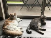 実際のところ猫は飼い主のことをどのように思っているのだろうか?「大きな猫、でも敵じゃない」。と思っているらしい。(英研究)