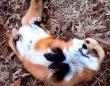 8年間の尊い思い出をありがとう!1匹のアカギツネに飼い主が捧げた感動のトリビュート動画
