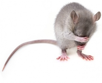 ストレスは遺伝する。マウスの父親は精子を介して子孫にストレス反応を伝えていることが判明