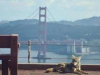 新型コロナウイルスで人間の少なくなった街に姿を現し始めた野生動物たちの姿がとらえられる