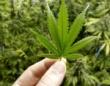 大麻容疑で逮捕の元KAT−TUN・田中聖が釈放 「不起訴」になっても理由はわからない?