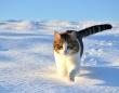 Photo by Polda2 (Sabrina)(写真はイメージです)