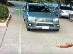 「通れないっ…!」 路上でスヤスヤ眠るワンちゃんがどいてくれない。