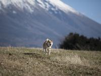 柴犬まる家の冬休みを紹介するよ! 初日の出に雪遊びで、まる大満足