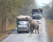 「今ここ検問中だから!」タイではゾウがトラックを止めて積み荷を検査するらしい