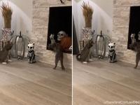 だからハロウィンは嫌だってあれほど...猫型骸骨に戦いを挑む猫ズ
